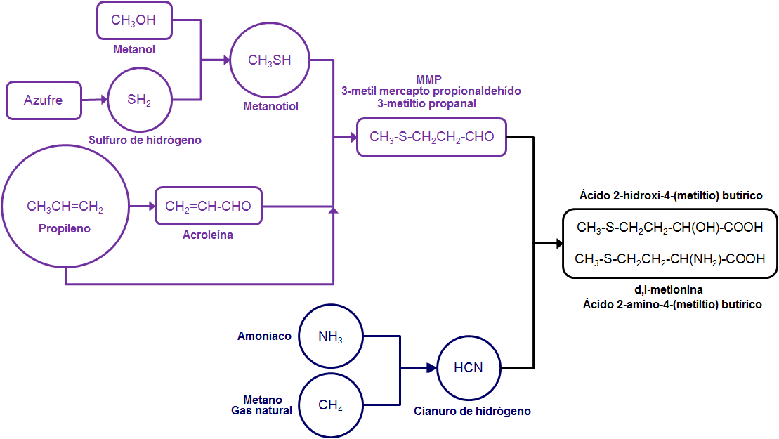 metionina2