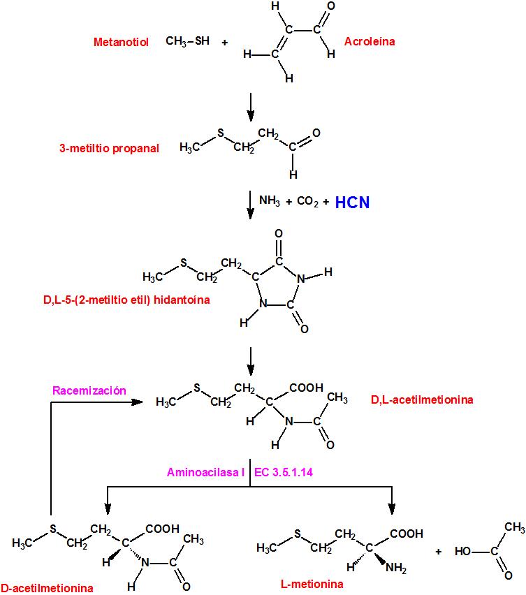 metioninasint